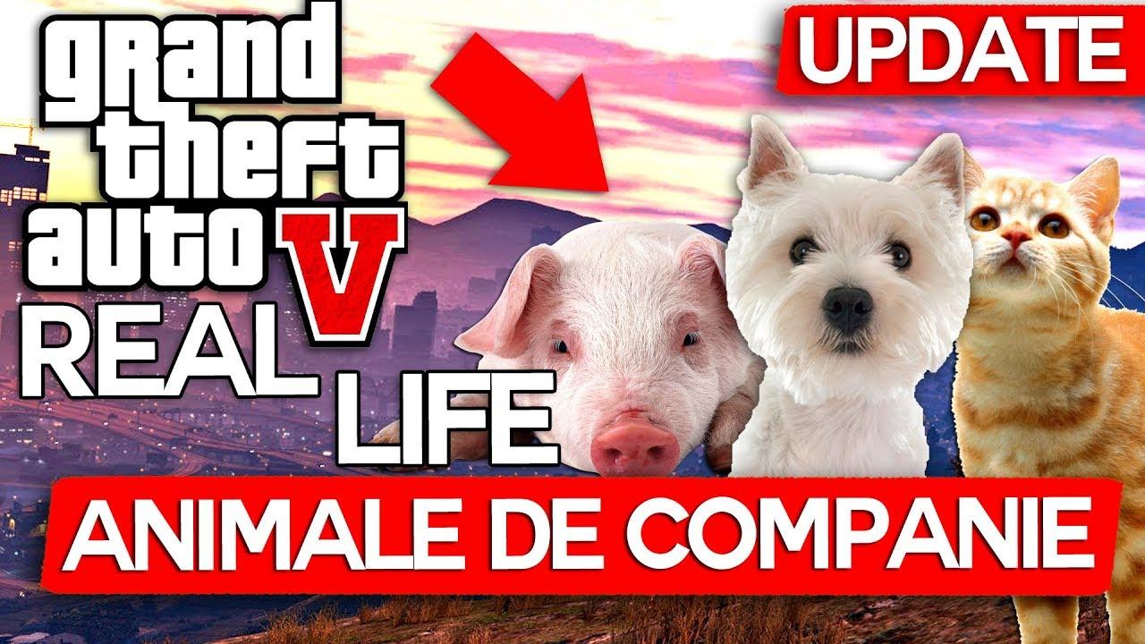 GTA Real Life ! Avem ANIMALE de Companie, Pisici, Catei, Porci !