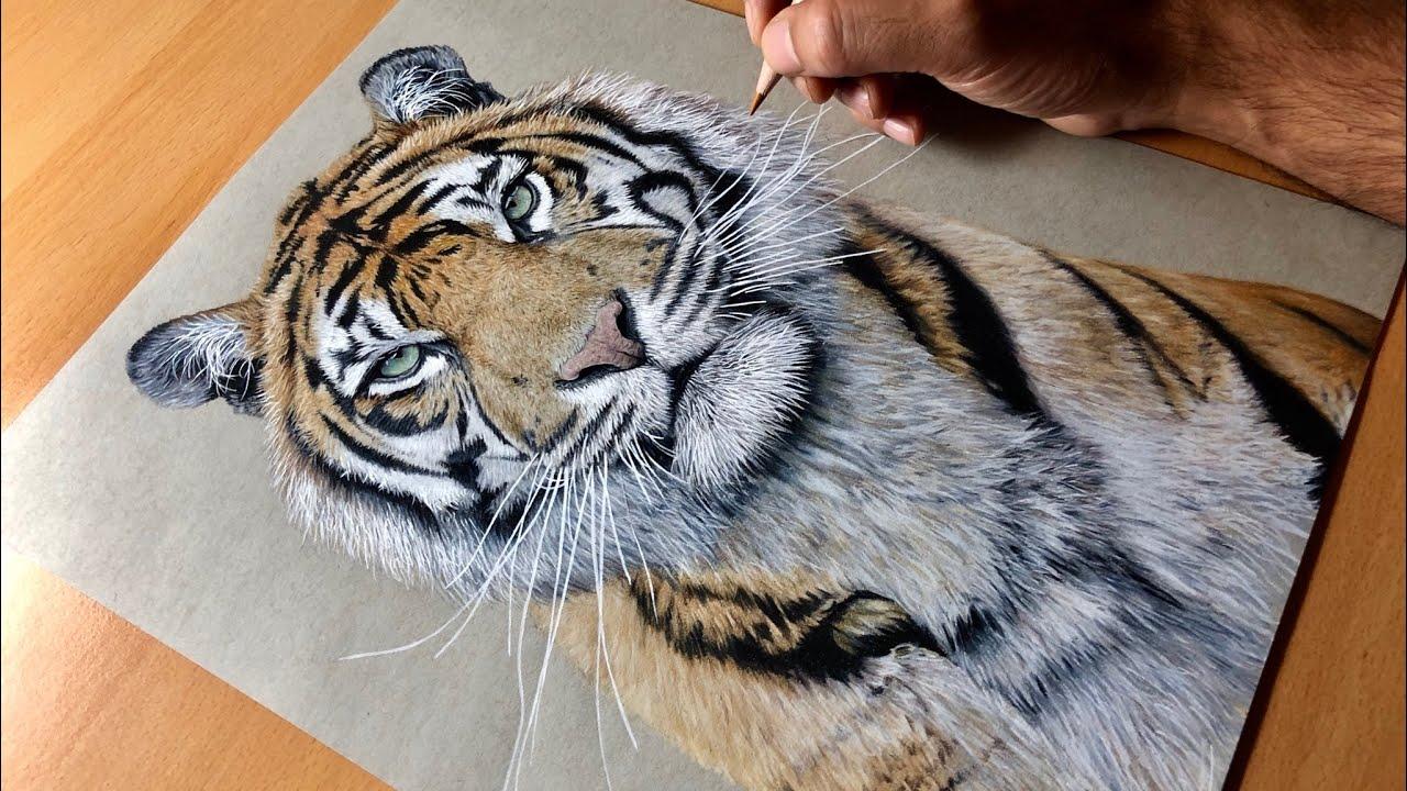 Drawing a Sumatran Tiger (Kirana) - Timelapse | Artology ...