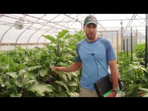 Take a Tour with Us of Johnny's Greenhouses!