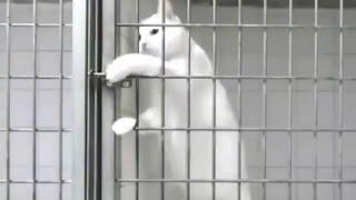 Свободу честным котам