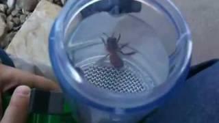 Killer bees sucked up in kids bug vacuum
