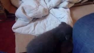 Котята растут скоро месяц . Почти все время игры и драки