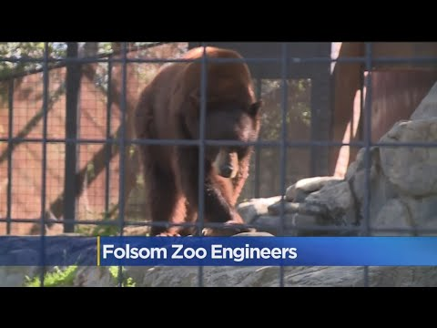High School Students Helping Engineers Install Upgrades For Folsom Zoo