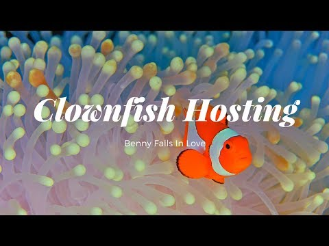 Clownfish Hosting: Coral Vs. Anemone