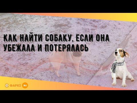Вопрос: Что делать, если потерялась собака?