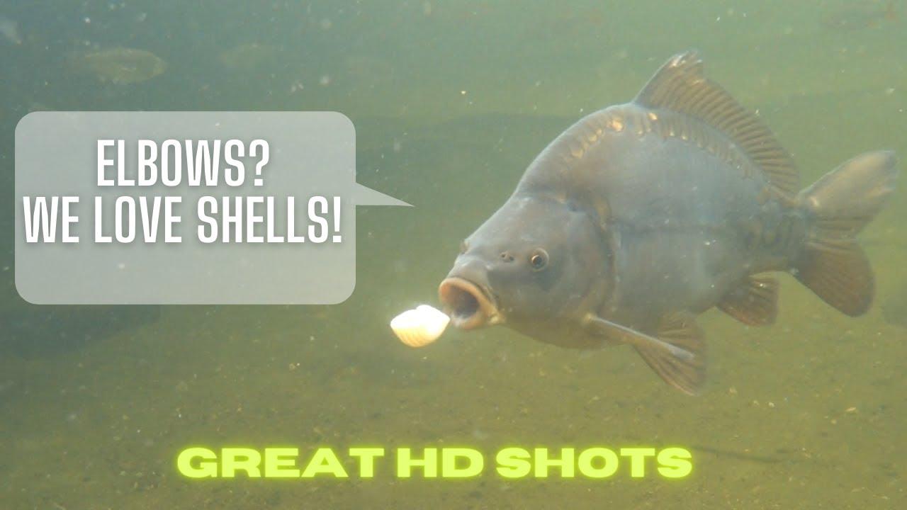 parazita sladkovodnich ryb