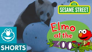Sesame Street: Elmo And Zoo Animals Play Games!