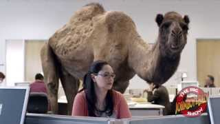 Hump Day Blues with the GEICO Camel