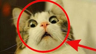 TRY NOT TO LAUGH OR GRIN - Funny Animals Compilation 2016 ! Part 1 thumbnail