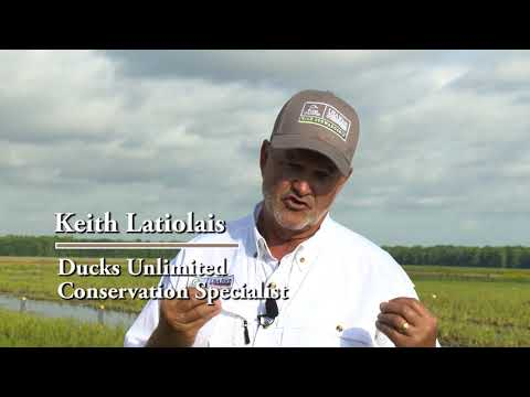 Soil Health Partnership In Louisiana