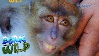 Born to Be Wild: Doc Nielsen tries to save an injured monkey