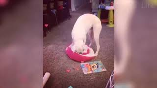 TRY NOT TO LAUGH - Cute FUNNY ANIMALS - Funny Videos October 2019  # 43