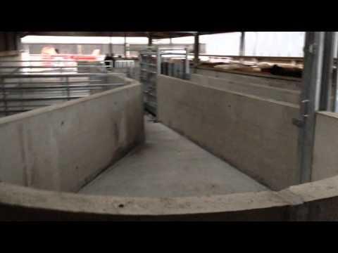 Livestock Handling System