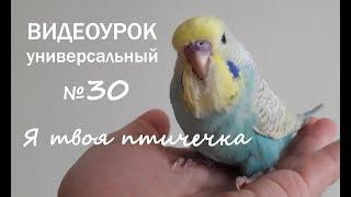 """🎧 Учим попугая говорить. Урок № 30: """"Я твоя птичечка"""""""