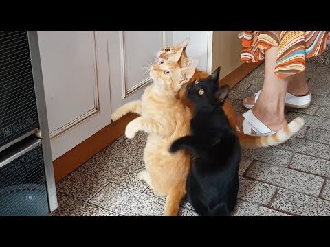 Cats Asking For Food