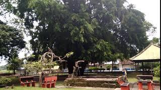 Monkey Forest Ubud Bali   Бронировать/ купить тур из Калининграда, Польши Тел. +7(4012)900095