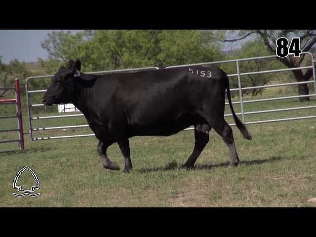 Pearcy Angus Ranch Lot 84