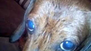 Моя мокрая собака °•°