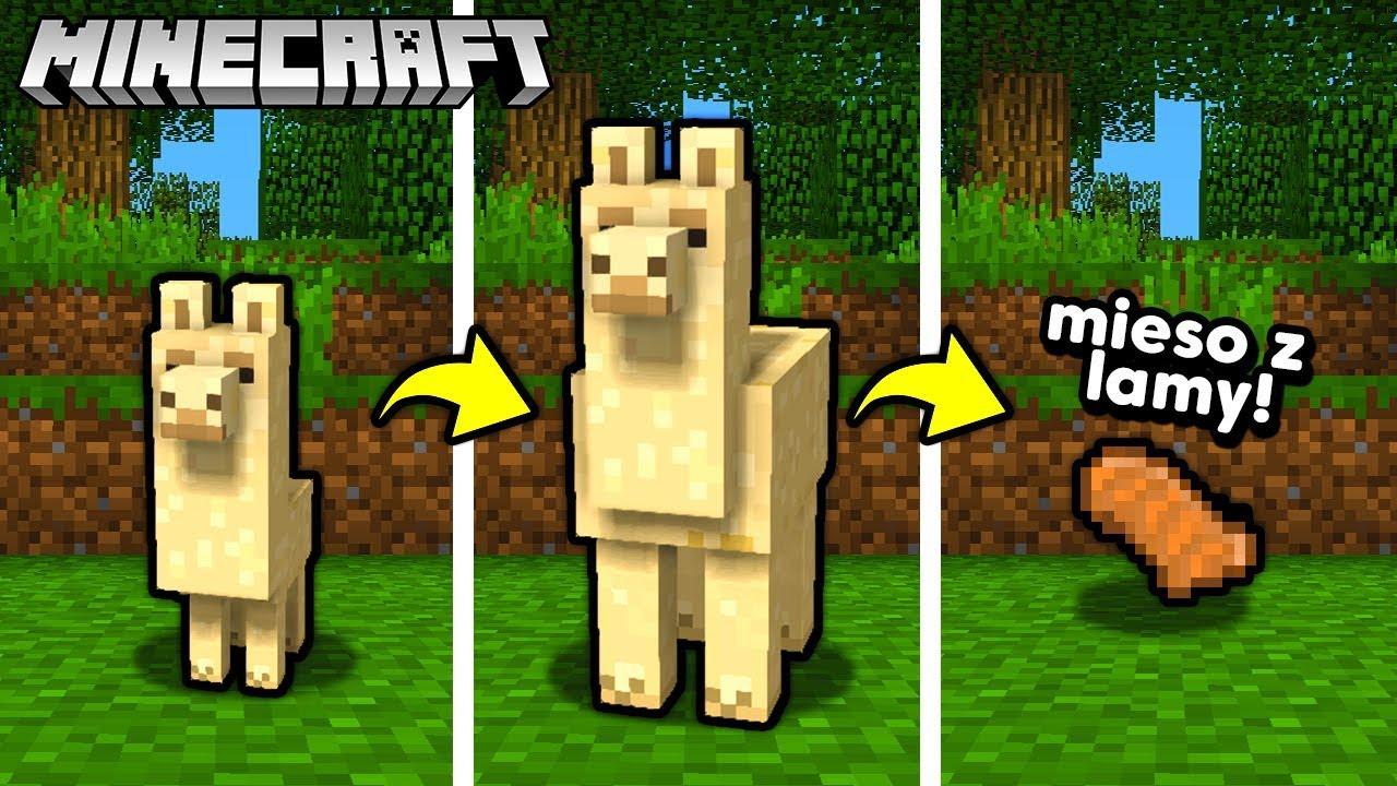NOWE MIĘSO? MIĘSO Z LAMY – Minecraft