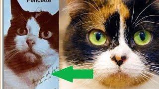 Почему куки Slivki Show не полетела в космос? | Кошки в космосе