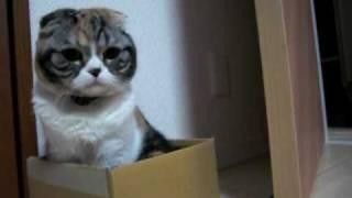みぃこ、小さな小さな箱になんとか入ろうとしています。