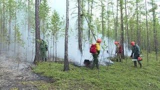 Сводка о пожарах в Якутии (07.08.19)