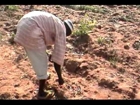Ghana 2008: A Junior Fellow's Experience