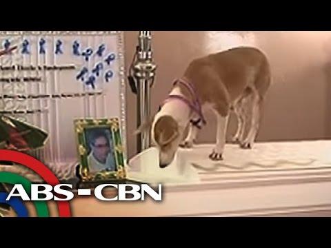TV Patrol: Asong hinihintay ang among inatake sa puso