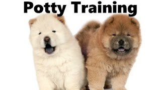 How To Potty Train A Chow Chow Puppy - Chow Chow House Training Tips - Chow Chow Puppies