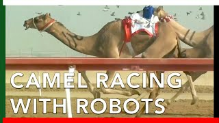 Camel Racing with ROBOT JOCKEYS in Abu Dhabi, UAE