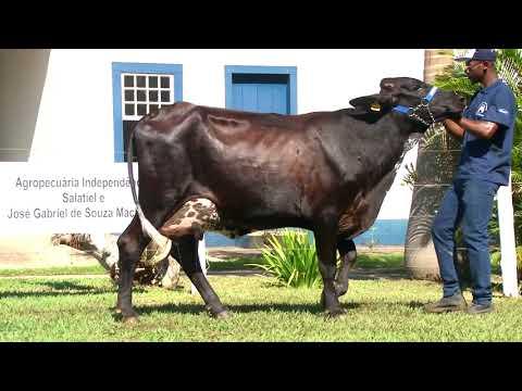 LOTE 55   RITA -   4º LEILÃO FAMÍLIAS - DOMINGO, 13 DE JUNHO, 10HS - REMATEWEB PLUS
