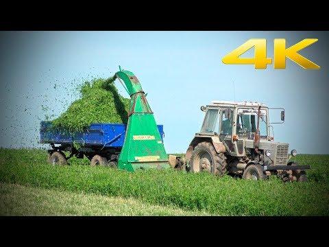 Старый трактор МТЗ-80 с косилкой КИР-1,5М - заготовка подкормки для фермы