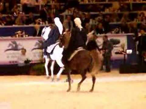 cheval arabe qui danse