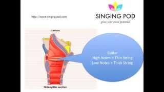 How a Voice Works - Sangtimer Stavanger | Singing Lesson