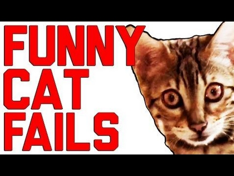 Funny Cat Fails Compilation || by FersFails 2016