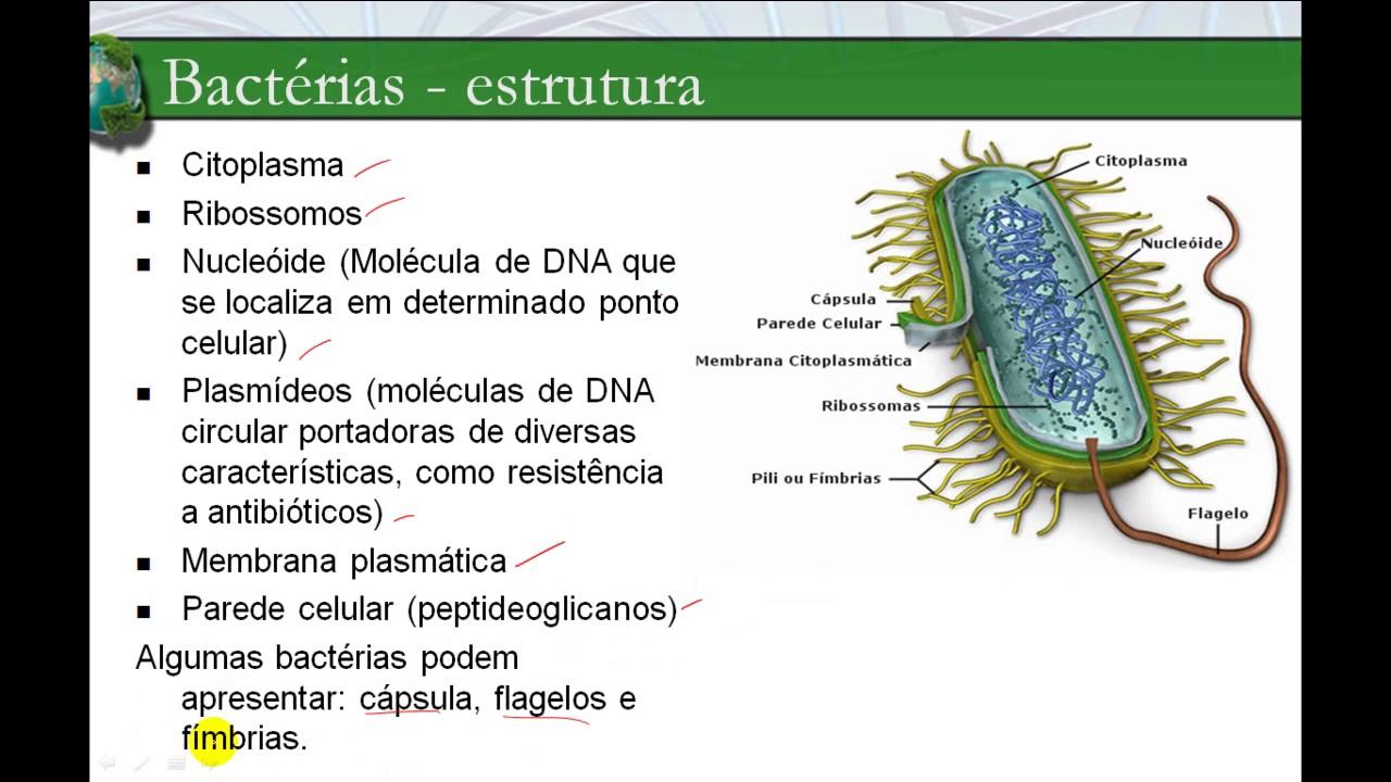 O Que São Bactérias Características Tipos Estrutura