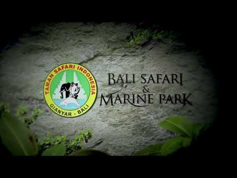 Night Safari, Bali Safari and Marine Park