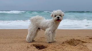 WE TOOK A PUPPY TO THE BEACH, WHAT HAPPENED?