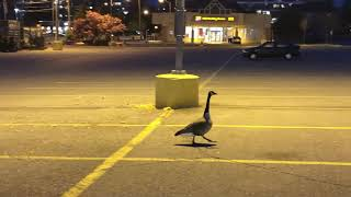 20190602, #Canadagoose, @ #southhillshoppingmall, #加拿大鵝