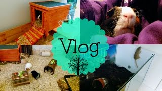 Tree House, Escaping Gerbil & Weigh Day