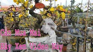 Cần Mua Mai Hãy Xem Video Này Xong Mua Nhé - Cay Canh Binh Dinh