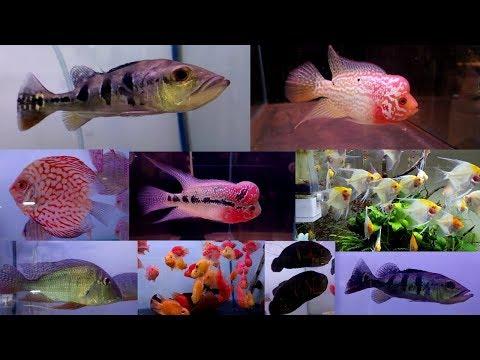 Aakar Aquarium Fish Store Borivali