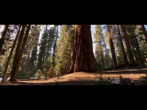 IPhone 11 Pro Cinematic Video Footage (shot In Sequoia National Park)