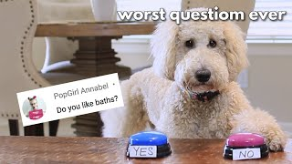 My Dog Answers Fąns Questions   Q&A with Dog Part 3!