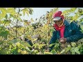 Spell - GOTS Certified Organic Cotton Farm