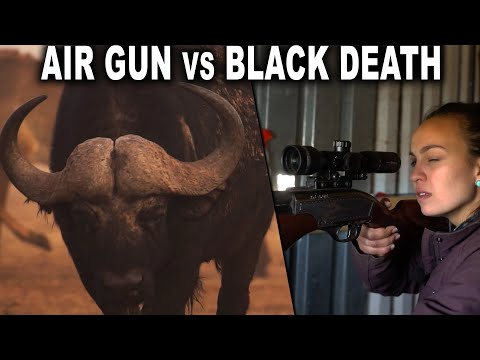 Girl Hunts Cape Buffalo With AIR GUN!!!!