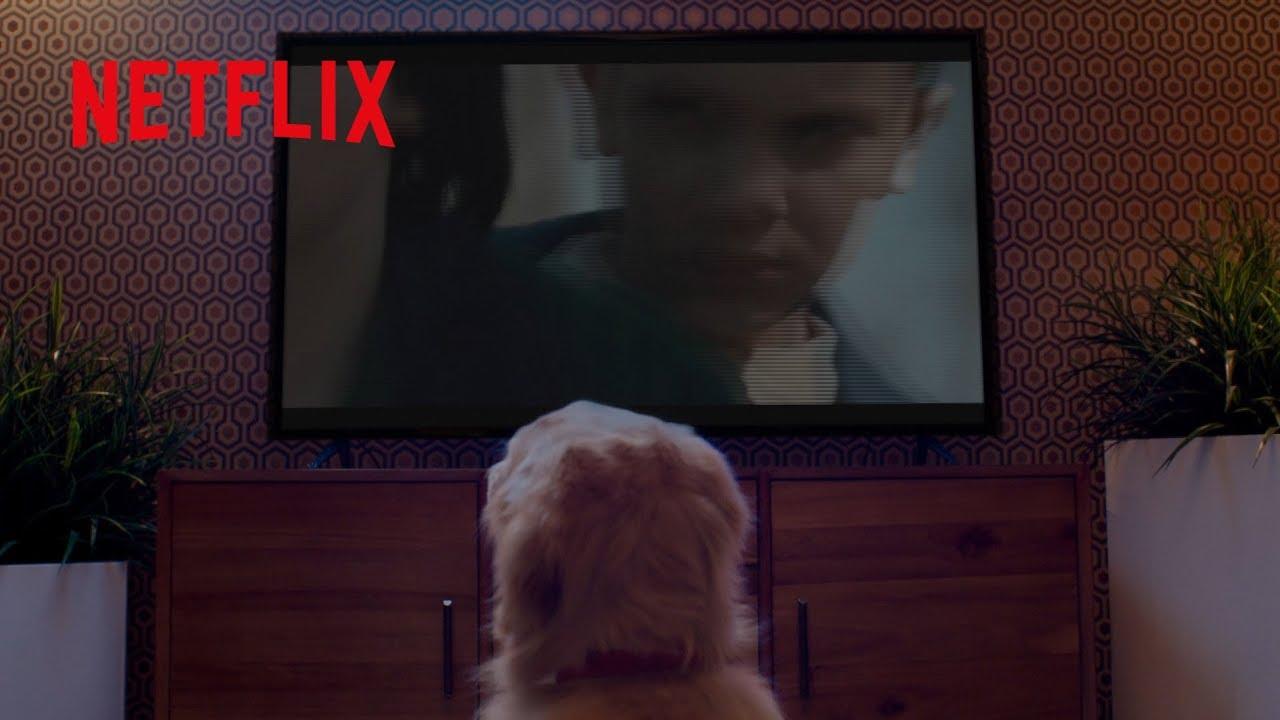 A Netflix e os teus animais de estimação vão juntos | Maratona felpuda