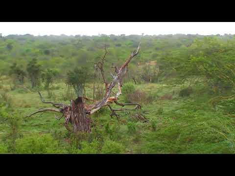 African River Wildlife Cam 03-15-2018 21:23:54 - 22:23:54