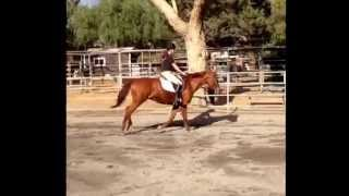Lesson on Misty Girl.... Trot, canter, 2-point, and sitting trot. Music:Hawaiian Rollar Coaster Ride