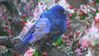 Красивые Птицы   Пение Птиц  Расслабляемся на гамаке   1